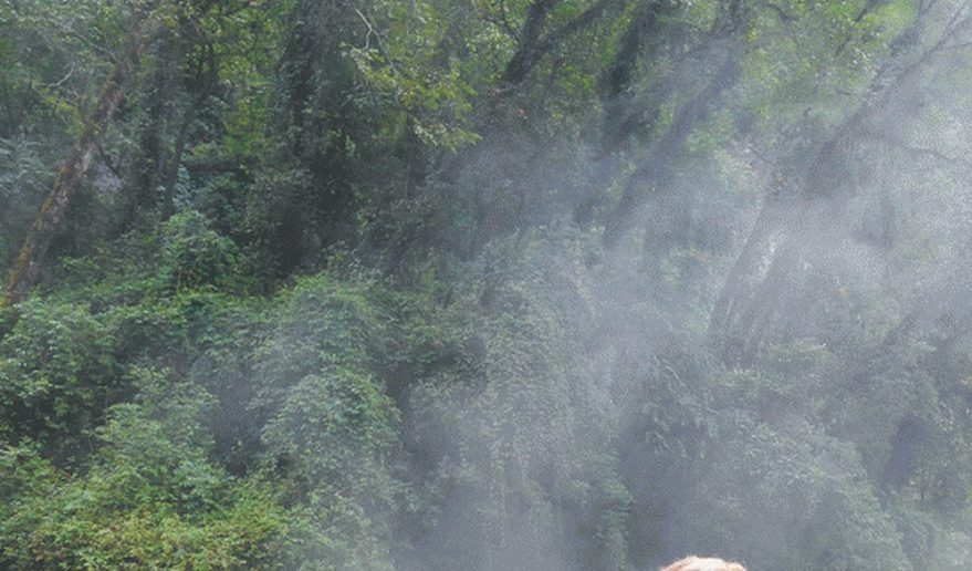 Annapurna Sanctuary Trek | Jhinudanda (Hot Spring)