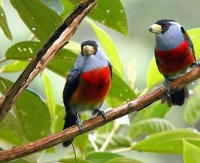 Bird Watching Tours | Boquete Panama Bird Watching