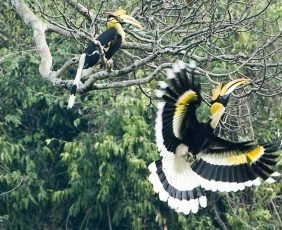 Koshi Tappu Wildlife Reserve | Bird Watching in Koshi Tappu Wildlife reserve.