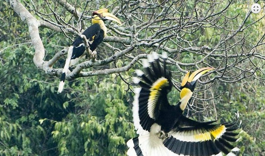 Koshi Tappu Wildlife Reserve | Bird Watching in Koshi Tappu Wildlife reserve.