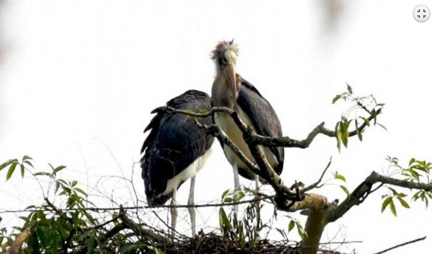 Bird Watching in Nepal.