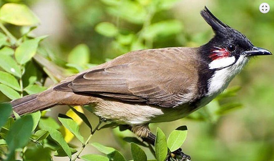 Bird watching during Phulchoki Hike.