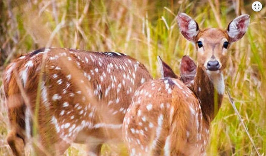 Bardia National Park | Deer inside jungle of Bardia National Park.