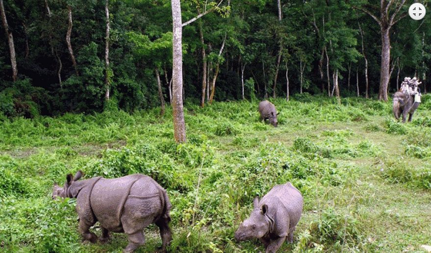 Nepal Holiday Tour | Elephant Safari at Chitwan