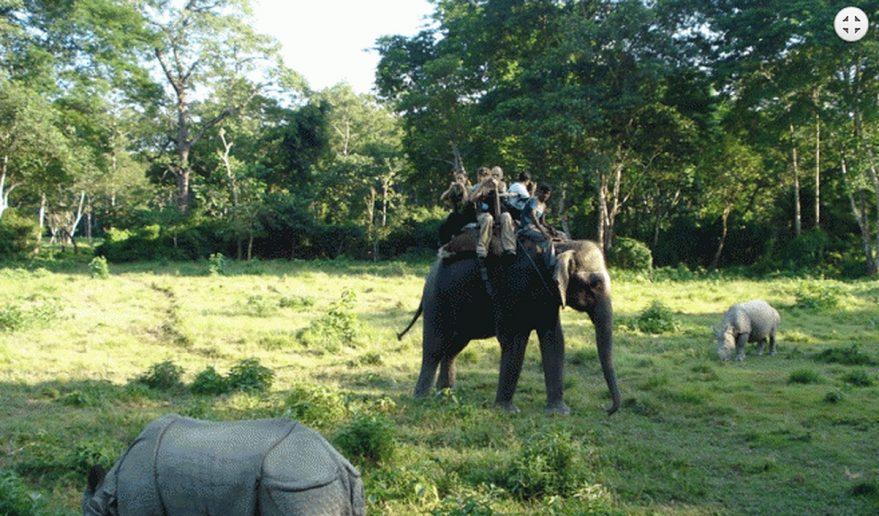 Nepal Tour | Elephant Safari inside Chiitwan National Park