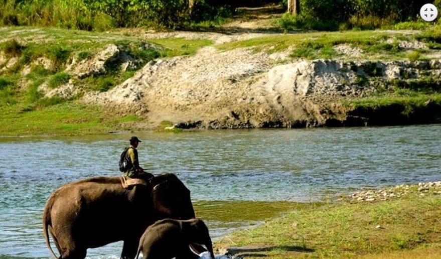 Bardia National Park | Elephant trainer giving training to his baby elephant.