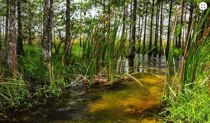 Koshi Tappu Wildlife Reserve | Jungle Walk - Koshi Tappu Wildlife Reserve.