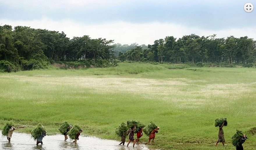 Bardia National Park | Locals gathering grasses to feed their animals at Bardia National Park.