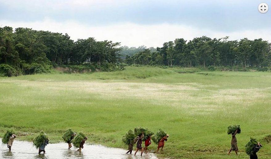 Bardia National Park | Locals gathering grasses to feed their animals at Bardia National Park.
