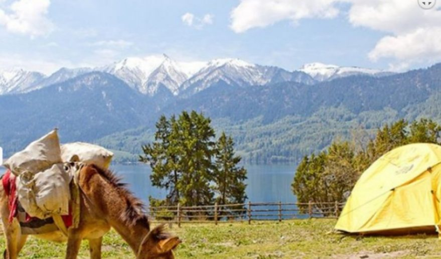 Rara lake Trek | Mules as a means of transportation