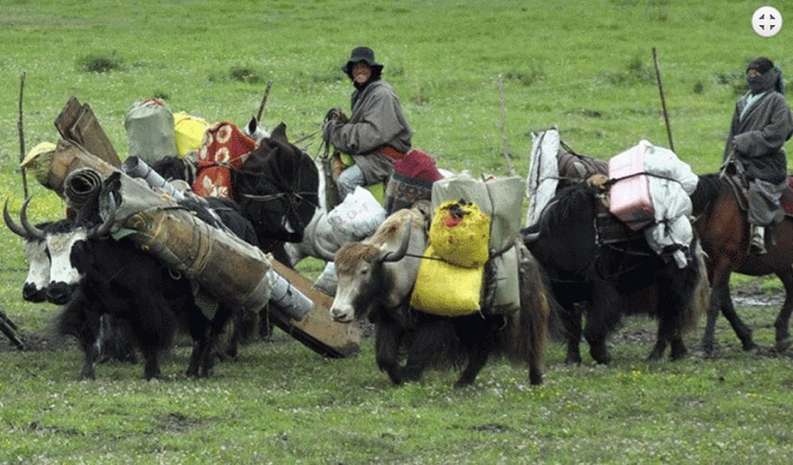 Dolpo Helicopter Tour | Mules as a means of transportation.