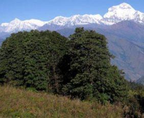Nagarjun Hill Hike