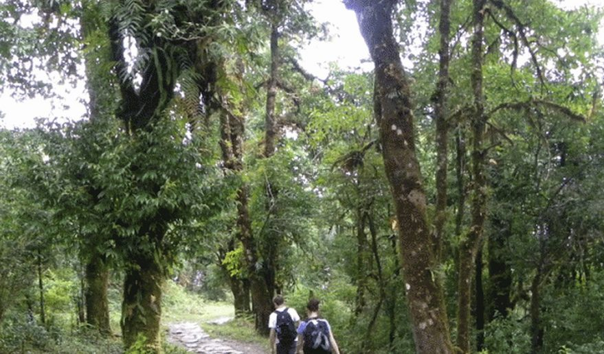 Ghorepani Poonhill Trek | Tadapani to Ghandruk [1940m/6363ft]