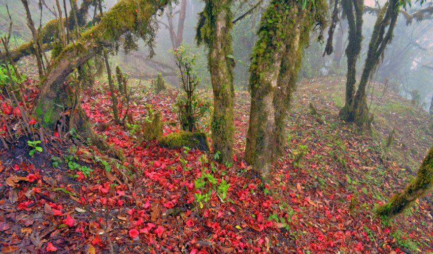Mardi Himal Trek   Gyachok Forest