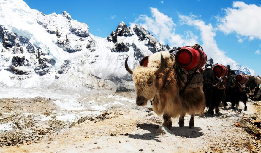 Everest Lobuche Trek 4900 m