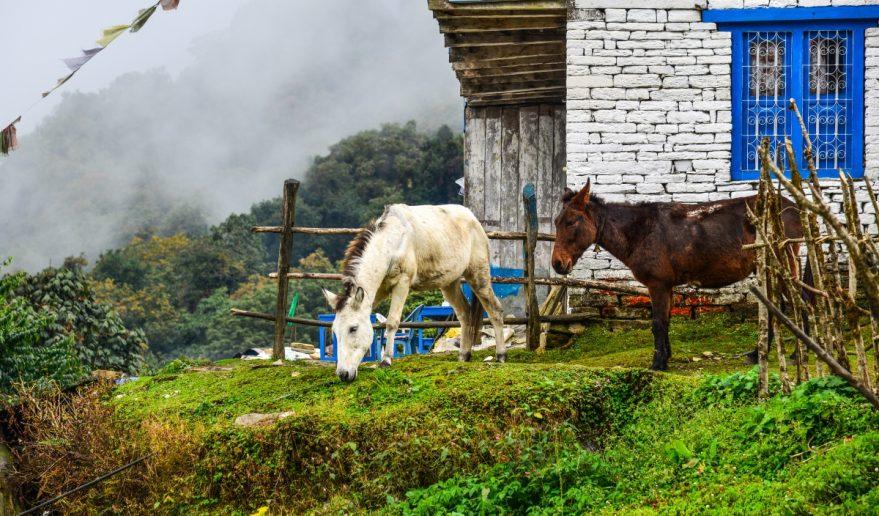 Horses at Pipa Village
