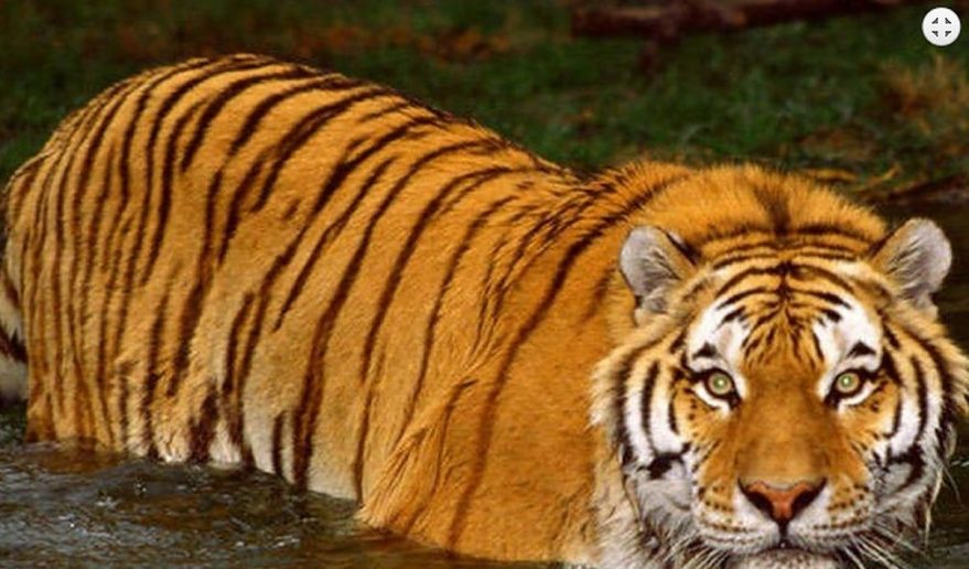 Bardia National Park | Locals gathering grasses to feed their animals at Bardia National Park. Tiger making their home at Bardia National Park.