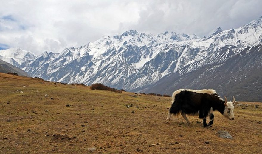Yeti at Langtang Valley Trek
