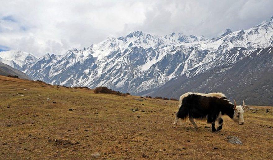 Yeti at Langtang Valley Trek