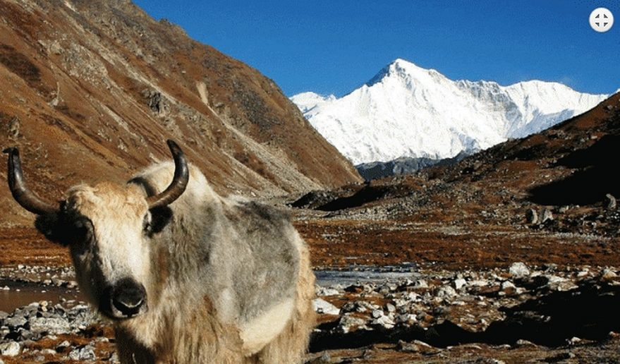 Dolpo Helicopter Tour | ak - famous for milk and cheese.