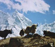 High Passes Treks in Nepal