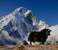 Trekking permit